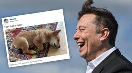 floki Elon Musk